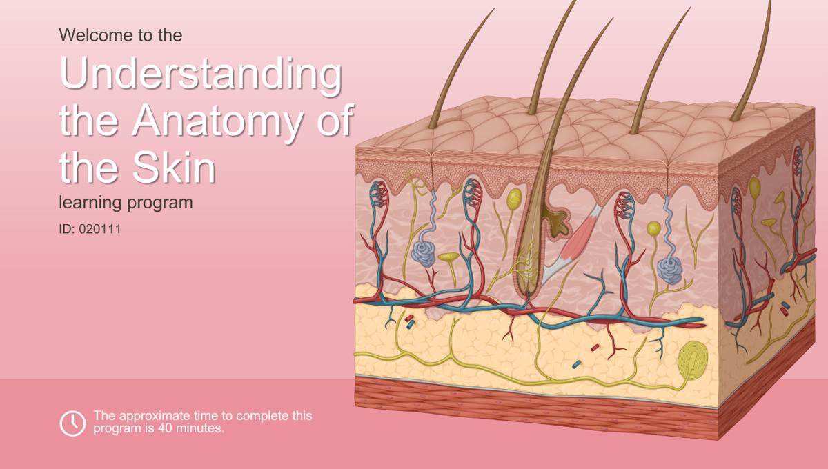 Understanding the Anatomy of the Skin-A.D.A.M. OnDemand