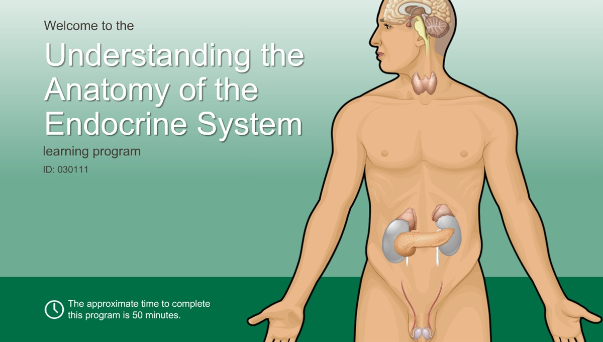 Understanding The Anatomy Of The Endocrine System Adam Ondemand