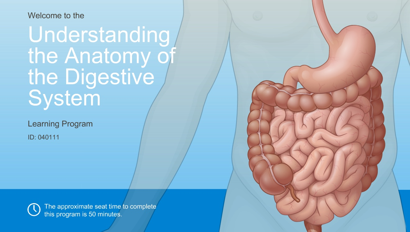 Understanding The Anatomy Of The Digestive System Adam Ondemand