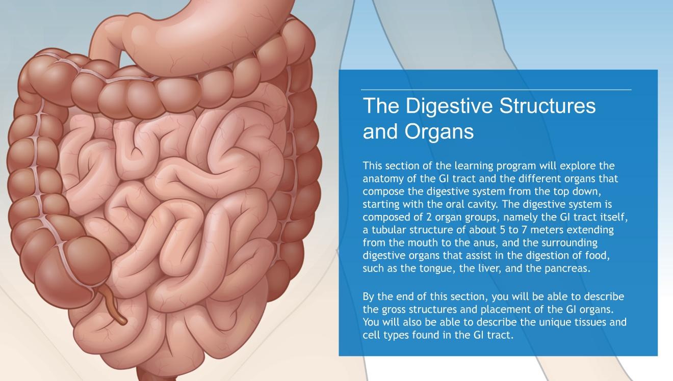 Understanding The Anatomy Of The Digestive System Adam Ondemand