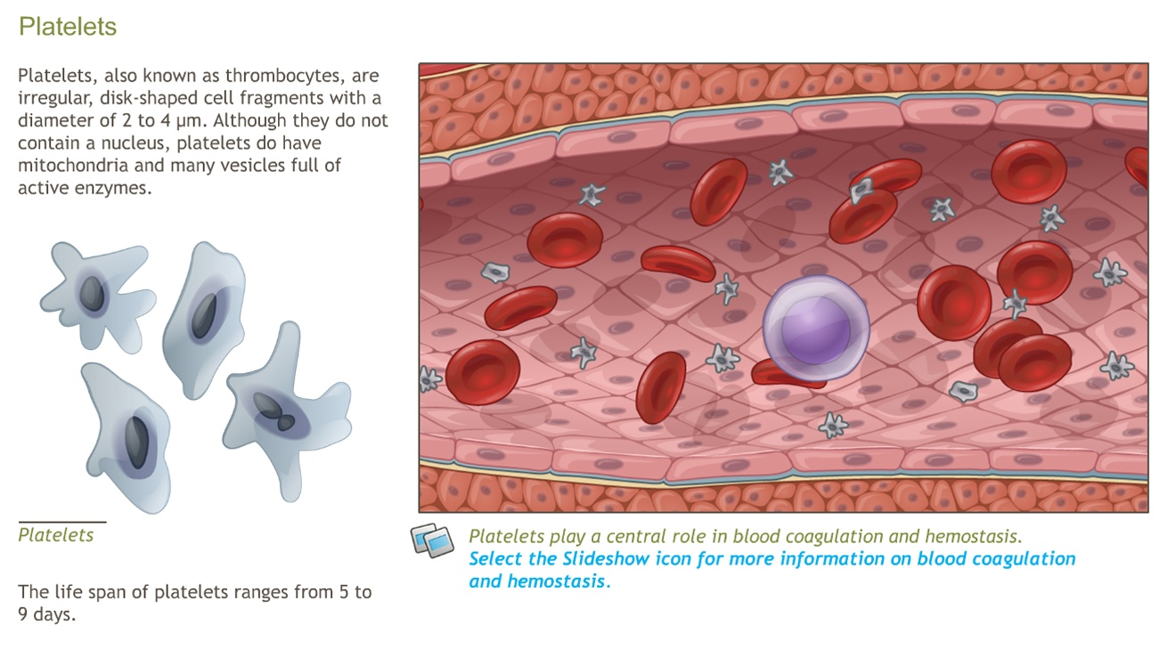 Blood Anatomy and Physiology-A.D.A.M. OnDemand