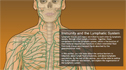 Understanding the Anatomy of the Immune System