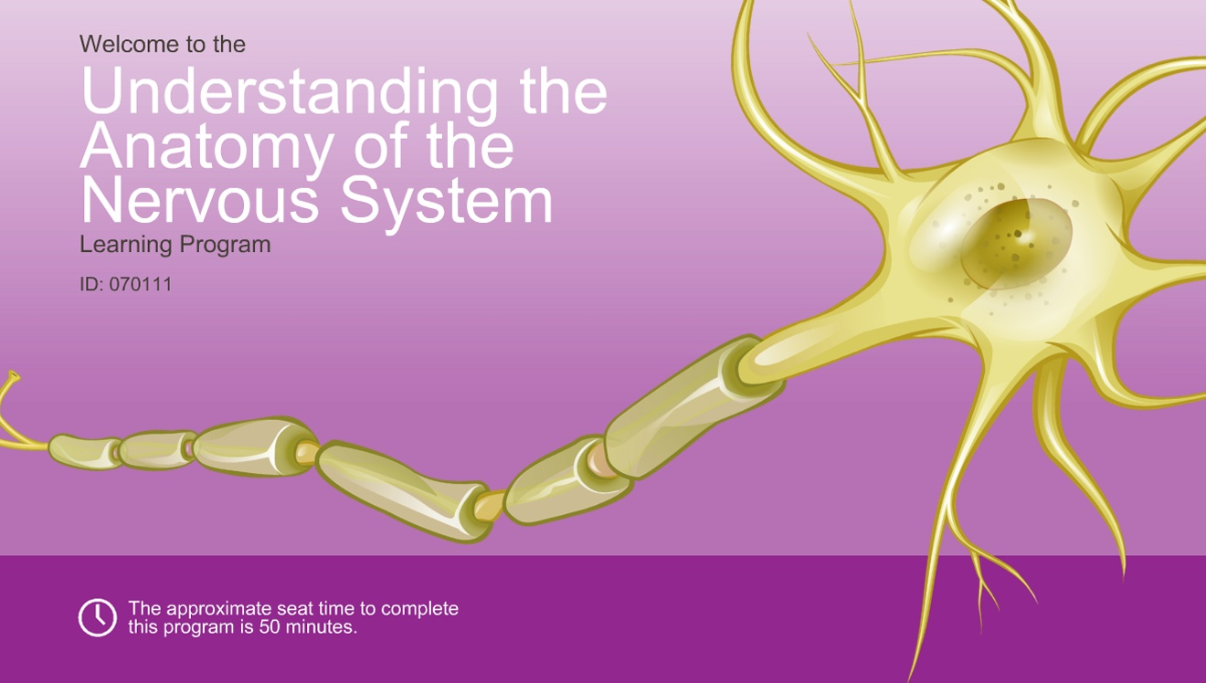 Understanding The Anatomy Of The Nervous System Adam Ondemand