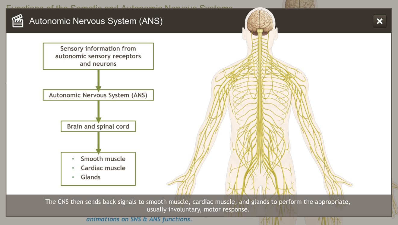 Understanding the Anatomy of the Nervous System-A.D.A.M. OnDemand