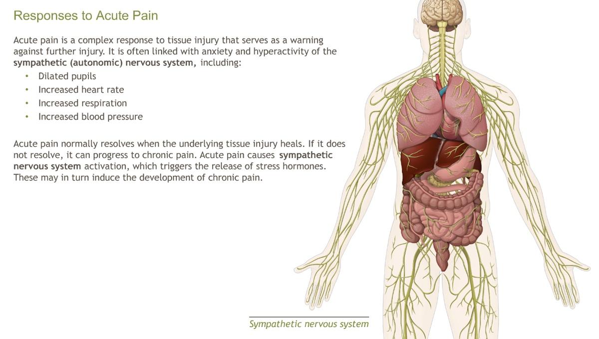 Ausgezeichnet Anatomy And Physiology Of Pain Fotos - Anatomie Und ...