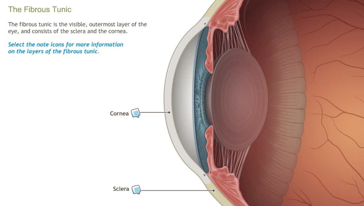 Understanding the Anatomy of the Visual System-A.D.A.M. OnDemand