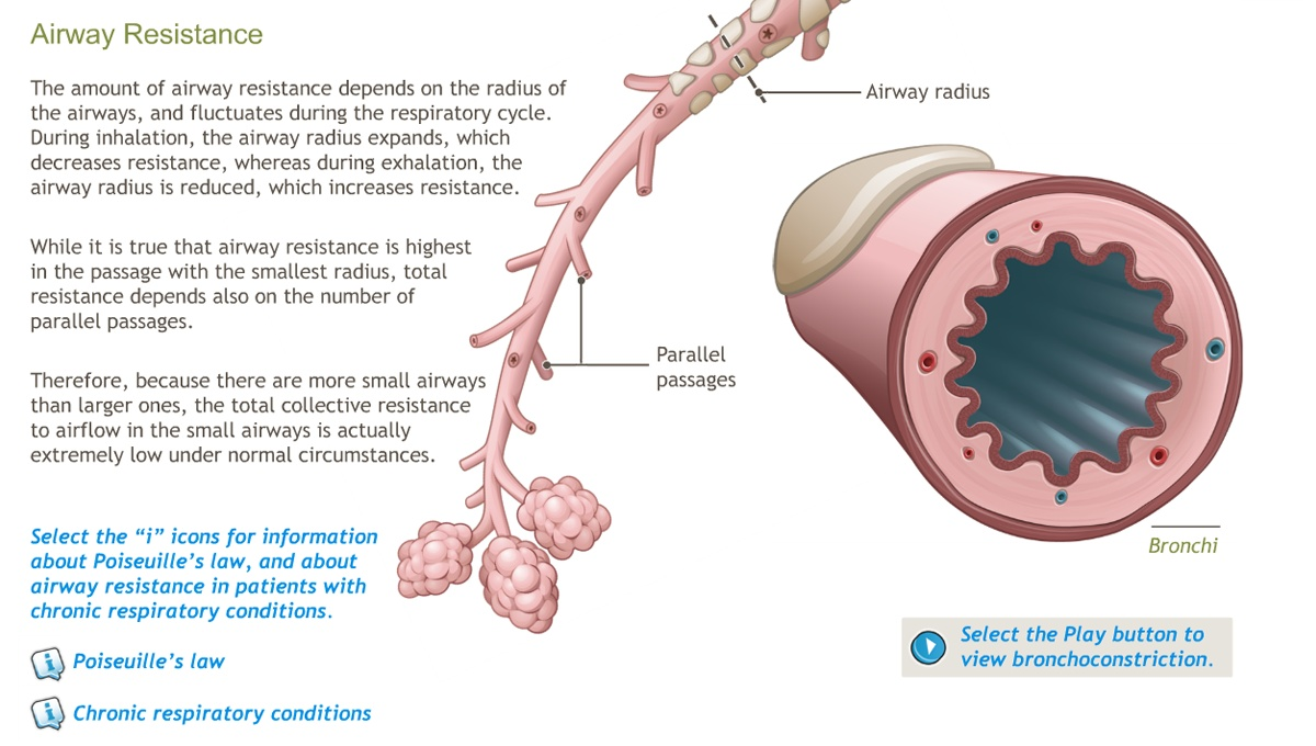 Understanding the Physiology of the Respiratory System-A.D.A.M. OnDemand