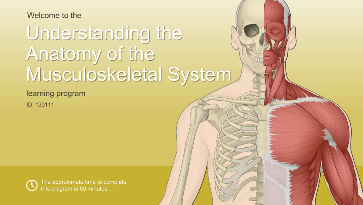 Understanding The Anatomy Of The Musculoskeletal System Adam